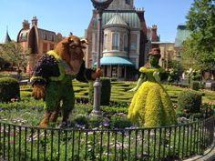 My Disney Life: WDW Honeymoon Recap- 3/31/13.  Beauty and the Beast Topiary from Epcot's Flower and Garden Festival.