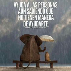 Ohhhh This is not a pic where you can see me very well but I wanted that you know that this wonderful elephant represent my new beautiful Family! Words Quotes, Wise Words, Life Quotes, Sayings, Motivational Quotes, Inspirational Quotes, Spanish Quotes, Positive Thoughts, Positive Quotes