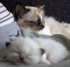 Shensi en haar kleine