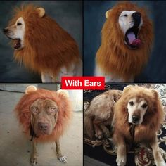 Cute Christmas pet clothes Halloween Dog Costume Lion Wigs Mane Hair Festival Party Fancy Dress Large Pet Accessories Cat Helloween Clothes Dress Up free delivery ONLY $11.29 https://www.aliexpress.com/store/product/Halloween-Dog-Costume-Lion-Wigs-Mane-Hair-Festival-Party-Fancy-Dress-Large-Pet-Accessories-Cat/2534012_32741995054.html?spm=2114.8147860.0.0.7YY8xf