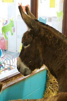 Donkey Sanctuary June 2015 21 | von eye hart