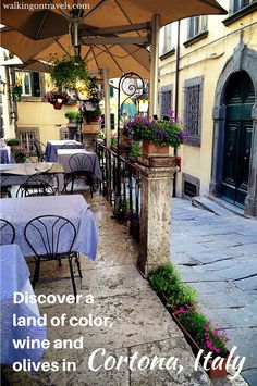 Discover a land of color, wine and olives... all with  your kids in Cortona Italy.