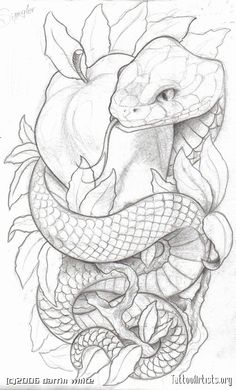Like the symbolism. Lots of snake and apple tattoos have an angry looking snake, which is not what I want to go for