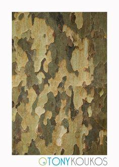 bark, tree, layered, peeling, shapes, travel, photography, art, Tony Koukos