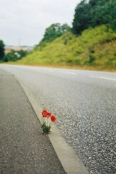 I hope to be as brave as this strong and beautiful flower.......