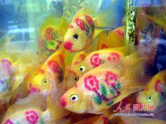 Parrot fish for fresh water tanks. Watercolor Fish Tattoo, Goldfish Tattoo, Saltwater Aquarium Fish, Parrot Fish, Cool Fish, Fish Drawings, Underwater Creatures, Beautiful Fish, Pretty Fish