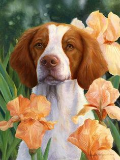 """""""Compliments"""" A Limited Edition Brittany Print"""