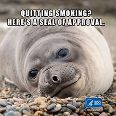 Quitting smoking is one the best choices you can make. If you haven't quit already, call 1-800-QUIT-NOW for help getting started.