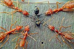 Insectos en Guerra HD ~ Documentales Online