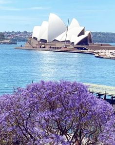 Sydney New South Wales, Sydney News, Opera House, Building, Places, Travel, Viajes, Buildings, Destinations