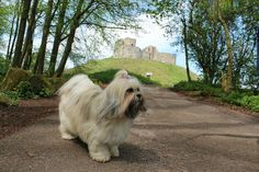 Stafford Castle | Wildlife