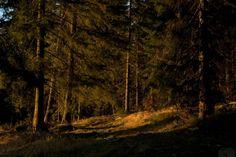 Papel de parede com uma densa floresta exuberante detalhadas