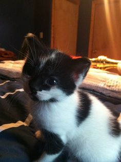 Cute kitten!