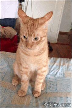 piores-gatos-mundo-6