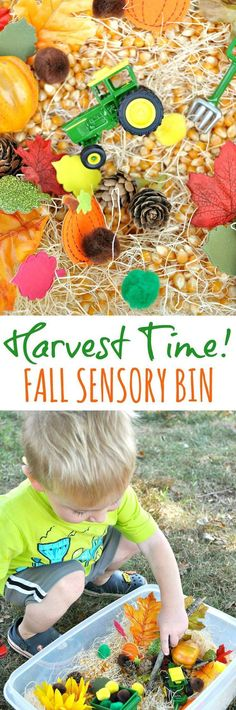 It's Harvest Time! This Fall Sensory Bin is an easy and affordable way to entertain and engage toddlers and preschoolers this season, and it only takes about 5 minutes to put together!