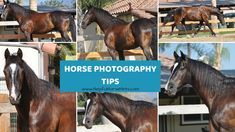 Horse Photography Ti
