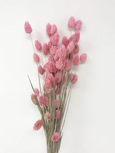 Phalaris DRIED - Pink - Used Ruler inch in the above pictures - ships from California, US Purple Vintage Flowers Wallpaper, Flower Background Wallpaper, Flower Phone Wallpaper, Flower Backgrounds, Dried Flower Bouquet, Flower Bouquet Wedding, Dried Flowers, Flower Aesthetic, Pink Aesthetic