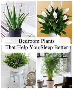 Did you know that putting certain plants in your bedroom can help to improve your sleep quality? It's true! The presence of plants reduces stress, anxiety and helps with the removal of airborne pollutants. Not only do they look great and bring vitality and life to your living spaces, but they can have fantastic relaxing and purifying benefits – which in turn can promote a healthy sleeping pattern. Probably you are worried that bedroom plants can be harmful #bedroomplants Best Indoor Plants, Indoor Garden, Garden Plants, Home And Garden, Inside Plants, Cool Plants, Clematis, Oxalis Triangularis, Wal Art