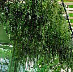Serre du Museum National d'Histoire Naturelle, Paris, Vegetal Ceiling | Vertical Garden Patrick Blanc