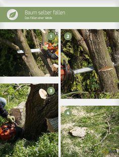 Soll ein Baum selbst gefällt werden gibt es einige Dinge zu beachten. Werden die hier beschriebenen Regeln beachtet, ist das Baum fällen aber kein Problem.