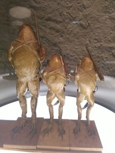 Musé des grenouilles Muse, Taxidermy, Horses, Animals, Playing Card Games, Animales, Animaux, Horse, Animal Memes