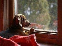 *Through the window~