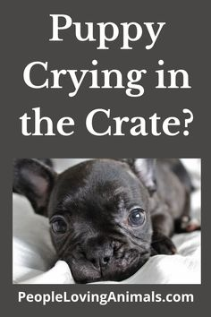 Video about stopping puppies from crying in the crate plus step-by-step, free puppy crate training from Professional Dog Trainer, Doggy Dan. Puppy Training, Dog Training