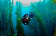Scuba diving in the Kelp Forest in the Channel Islands National Park, California USA. Most Visited National Parks, Us National Parks, Parc National, Small Motor Boat, Channel Islands National Park, Kelp Forest, Paddle Boat, Adventure Activities, Thailand Travel