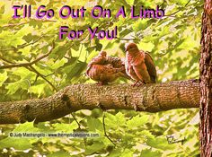 I'll Go Out on a Limb for You!