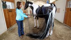 San Diego's Michele Macfarlane will be participating in the annual Rose Parade with her  American Saddlebred horses. (File photo)