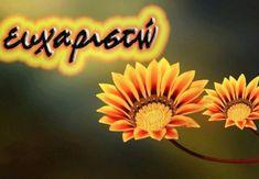 Dear Friend, As You Like, Birthday Wishes, Hug, Thankful, Monogram, Neon Signs, Stickers, Health