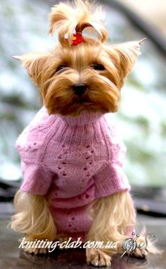 Knitting Patterns Free, Free Pattern, Knitting Club, Cat Sweaters, Cat Accessories, Dog Dresses, Pet Clothes, Pet Toys, Teddy Bear