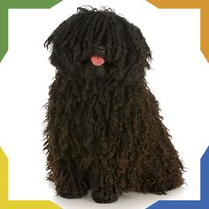 Did you know that despite their dreadlocked appearance Pulis [sic] are actually very quick dogs? The Puli has a long history of being a working dog, helping Hungarian shepherds for over years. Beautiful Dog Breeds, Beautiful Dogs, Hungarian Puli, Puli Dog, Goofy Dog, Working Dogs, All Dogs, Insurance Website, Komondor