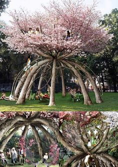 Amazing tree!                                                                                                                                                                                 More