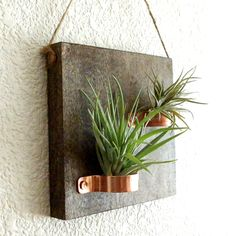 Hanging Wood Plaque with Copper Holders and Two Air Plants by EmmaClaireShop on Etsy https://www.etsy.com/listing/487391911/hanging-wood-plaque-with-copper-holders