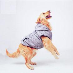 Купить товарНовые осенние большие Товары для собак одежда серый мягкий Pet куртка жилет собака балахон чау чау золотистый ретривер 3XL 4XL 5XL 6xl 7XL в категории Пальто и куртки для собакна AliExpress. Новые осенние большие Товары для собак одежда серый мягкий Pet куртка жилет собака балахон чау-чау золотистый ретривер 3XL 4XL 5XL 6xl 7XL