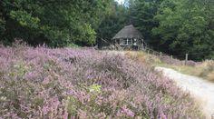 """""""Posbank is een stukje paradijs in eigen land. Check even of de heide in bloei staat. Het zorgt voor een extra dimensie in je bezoek !"""" www.reiskrantreporter.nl/reports/6349"""