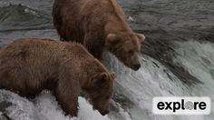 Ranger's Mike and Dave Play By Play - Brown Bears - Katmai National Park...