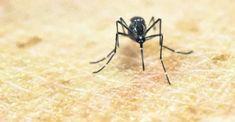 Zehirli virüs Zika 7 yıl içinde Anadolu'ya yayılacak