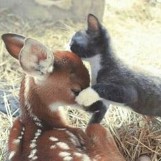 Fawn and kitty.