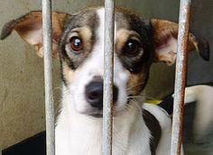 BOB Goats, Bob, Animals, Pet Adoption, Animales, Animaux, Bob Cuts, Animal, Animais