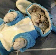 I love cute cats and kittens 'cuz they bring me happiness. Cute Little Animals, Cute Funny Animals, Funny Cats, Cute Kittens, Cats And Kittens, Kitty Cats, Cat Aesthetic, Cat Costumes, Beautiful Cats