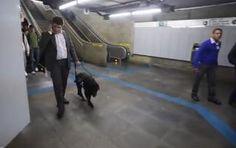 Metrô de São Paulo é referência em acessibilidade ~ PORTAL PCD ON-LINE