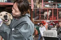 85 Dogs Are Rescued As Authorities Shut Down South Korean Canine Meat Market Carpet Spot Cleaner, Meat Farms, Meat Shop, Meat Markets, Live Animals, Down South, Carpet Stains, Humane Society, Large Dogs