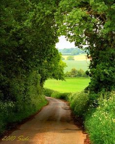 Country Lane - This is one of the things I like best in England! - Country Lane – This is one of the things I like best in England! Beautiful World, Beautiful Places, Country Life, Country Roads, Landscape Photography, Nature Photography, Tree Tunnel, English Countryside, Pathways