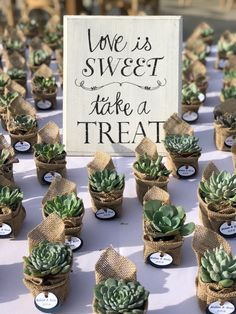 Our wedding succulent favors collection look beautiful and save you money at bulk wholesale prices. Succulent wedding favors last a lifetime! Succulent Wedding Favors, Beach Wedding Favors, Wedding Favors For Guests, Wedding Favor Tags, Wedding Souvenir, Bridal Shower Decorations, Bridal Shower Favors, Wedding Decorations, Bridal Shower Rustic