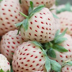 The pineberry looks like a strawberry and tastes like a pineapple