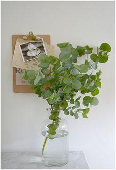 eucalyptus. Aromatherapy.  via Carole Poirot on Flickr.