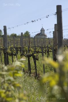 Erzsebet Cellars' Grand Cru vineyards in the famous and historical Tokaj (Toe-kai) region Dry White Wine, Wineries, Hungary, Monument Valley, Kai, Vineyard, Bottles, Travel, Vine Yard
