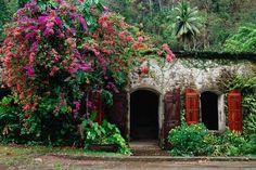 Wow! Jungle beauty